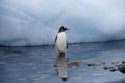 Lonely Pingu