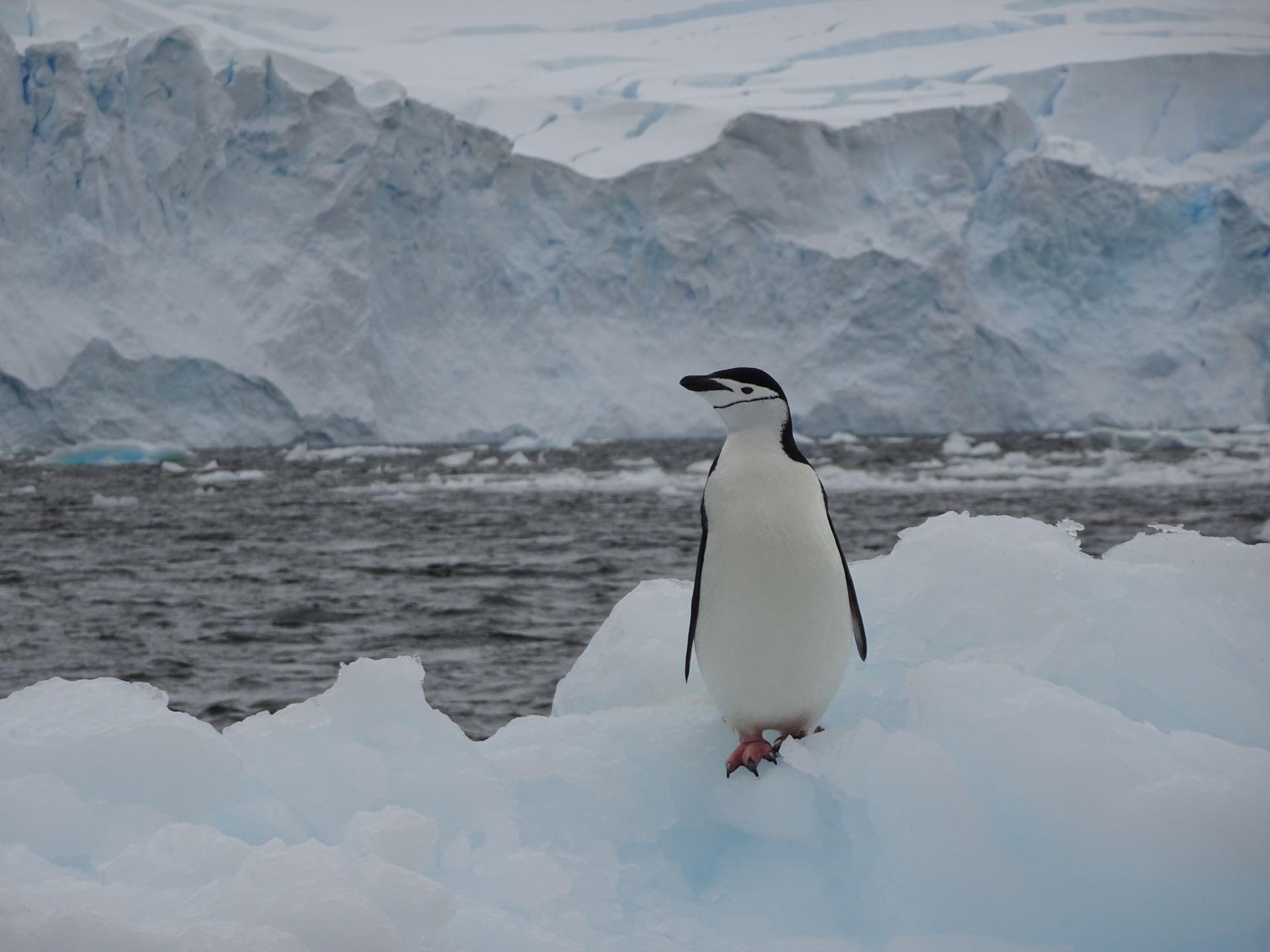 Noch ein lonely Pingu