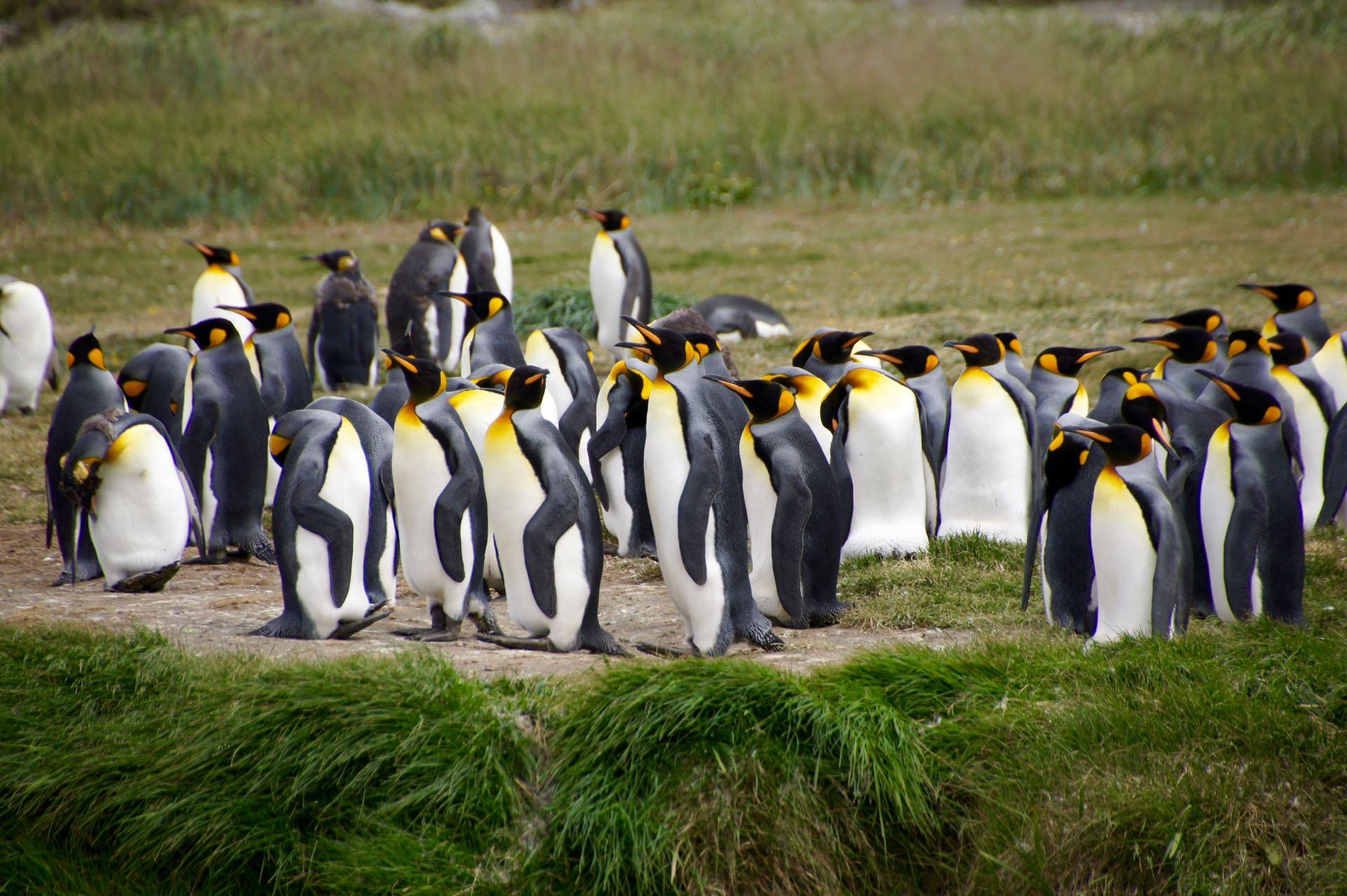 Gruppe Pingus