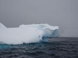 Eisberg mit Pingusjpg