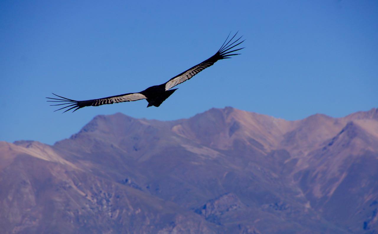 El Condor pasa!
