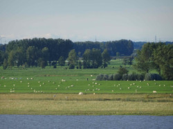 An der Elbe.jpg