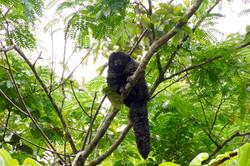 Monk Saki Monkey -