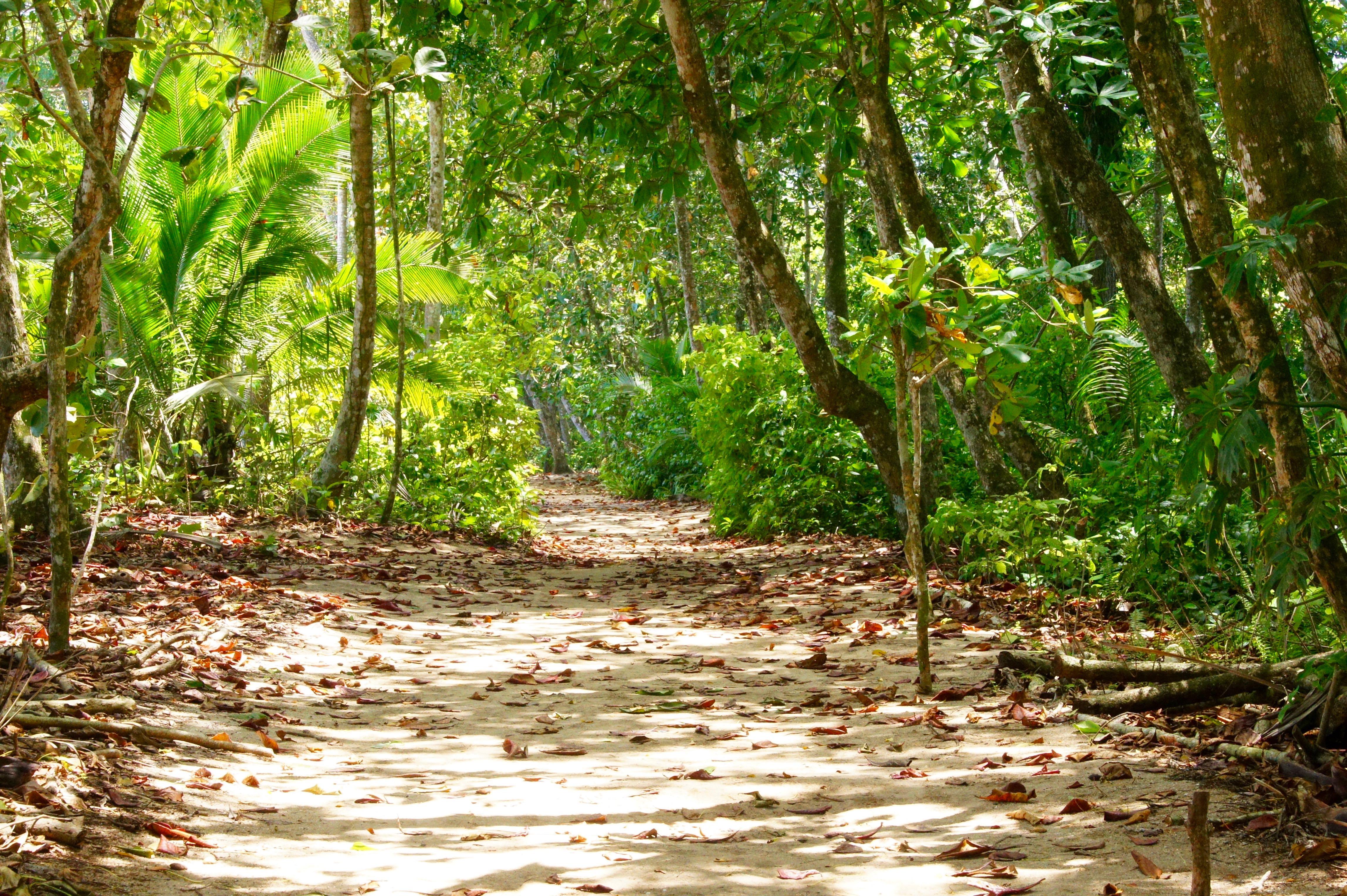 Weg im NP Cahuita