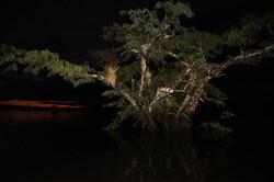 Laguna Cuyabeno