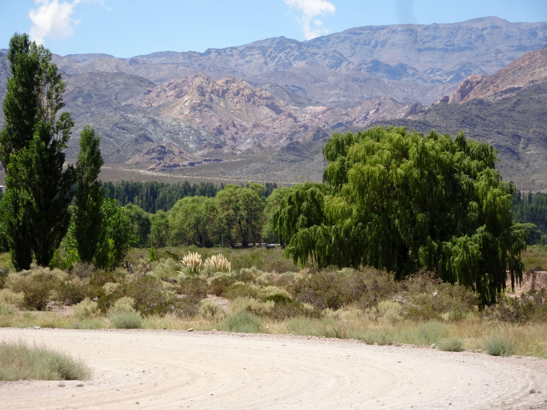 Auf 1700 m.ü.M. wird's grün
