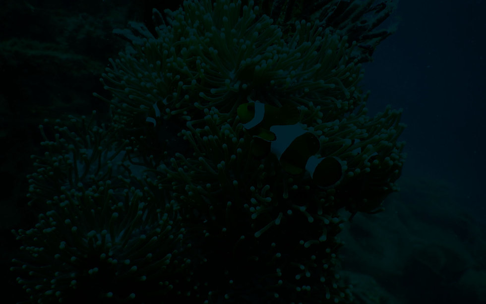 Clown Fish BG-WEB.jpg