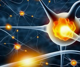 Study finds DMT promotes new neural formation