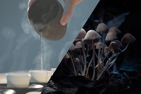 Mushroomkit.jpg