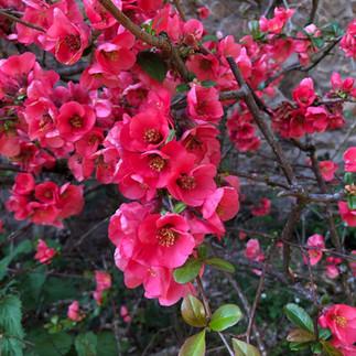Toujours des fleurs
