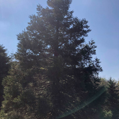 Différentes essences d'arbres