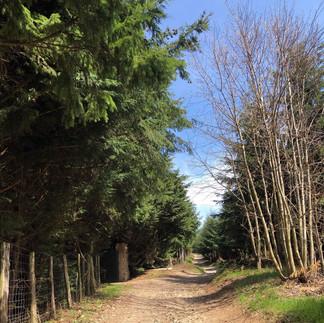 Randonnée GR76 / Compostelle