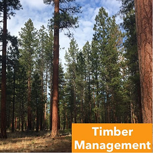 Services-TimberManagement.jpg