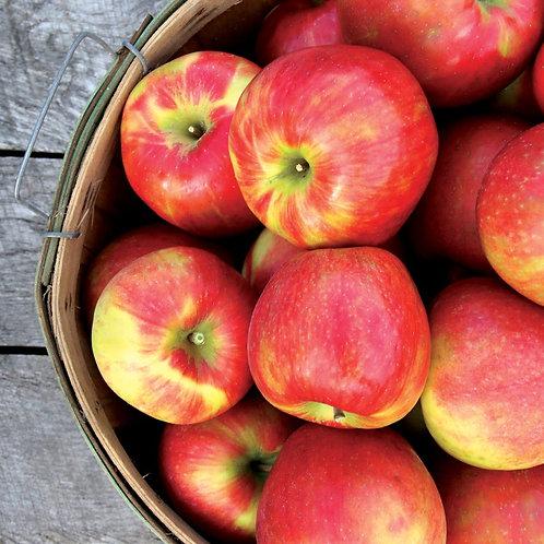 Honeycrisp apples 3 lb.