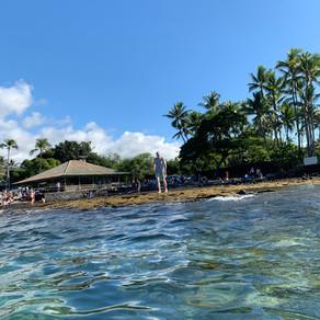 Swimming the Big Island