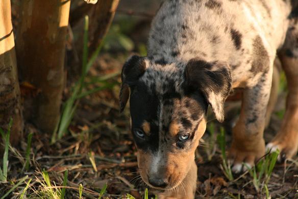 Puppy Legacy