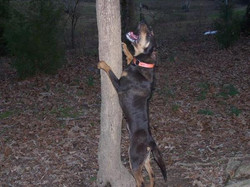 Dare on tree