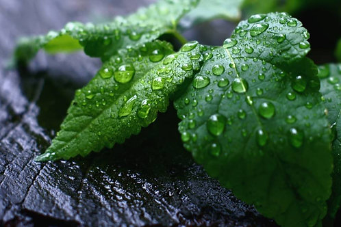 UJUICE 50ML - Menthol - Menthe a l'eau