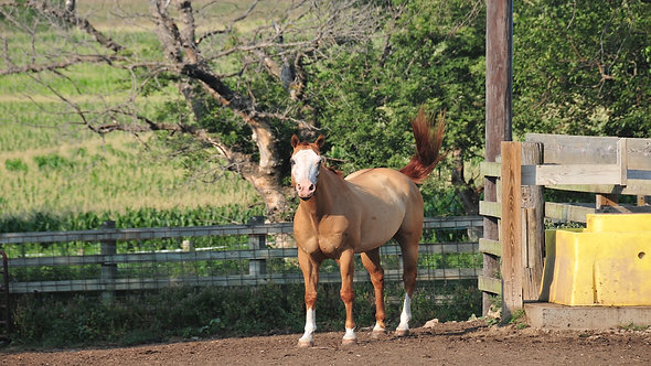 Nosey Horse