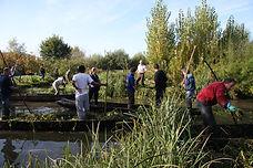 arrachage plantes invasives Patrimoine Marais