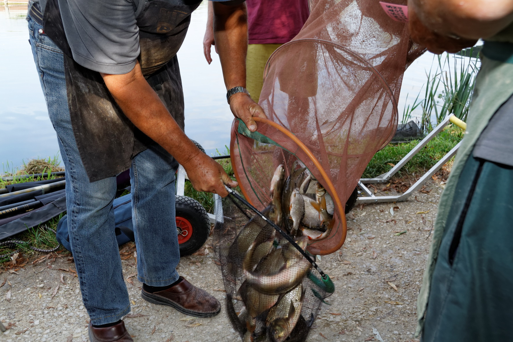 poissons pêche
