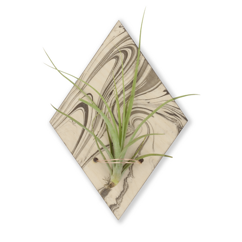 marbled air plant magnet