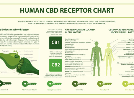 Cannabis exerts its psychoactive and medicinal effects by engaging with special receptor sites