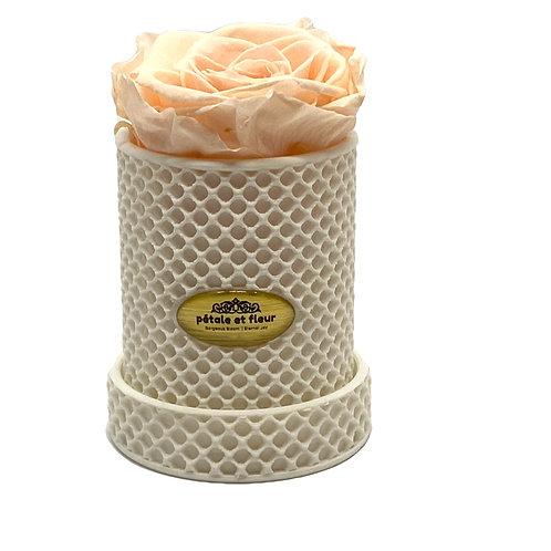 Single peach rose in a 3-D printed box