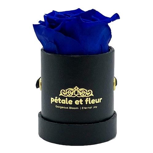Single blue color rose in black box