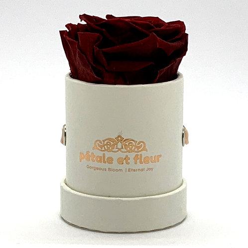 Single burgundy color rose in white box