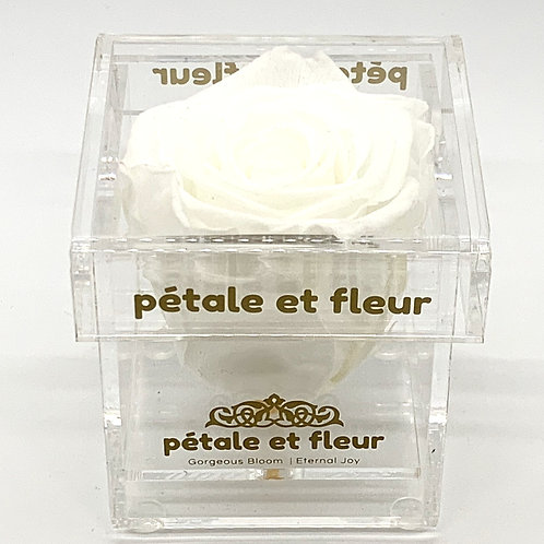 Single white color rose in acrylic box