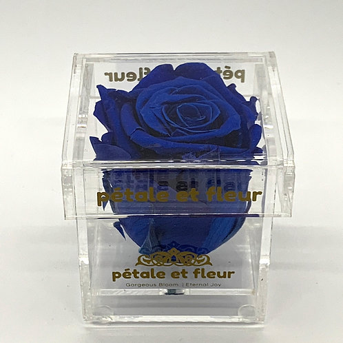 Single blue color rose in acrylic box