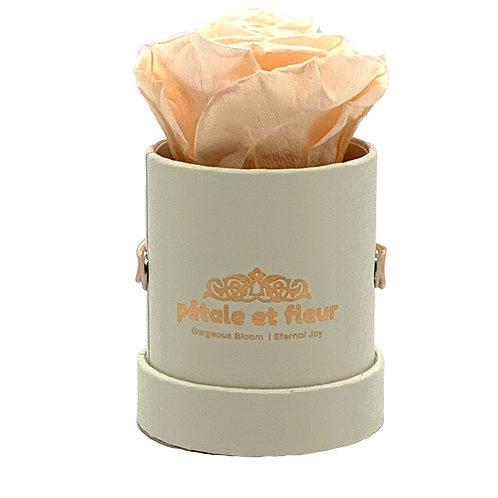 Single peach color rose in white box