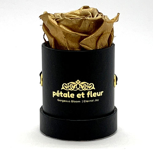 Single gold color rose in black box