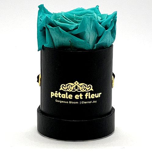 Single mint blue color rose in black box