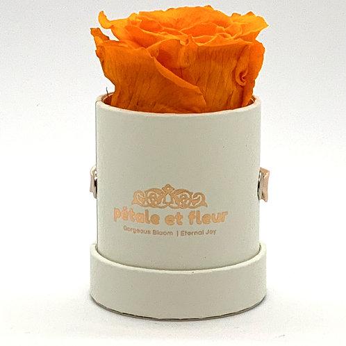 Single orange color rose in white box