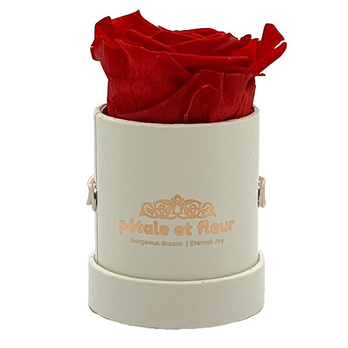 """Single red color rose in white box (2""""x 2""""x 2"""")"""