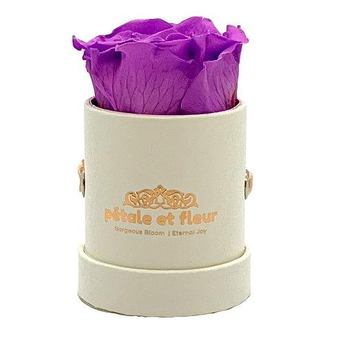 Single purple color rose in white box