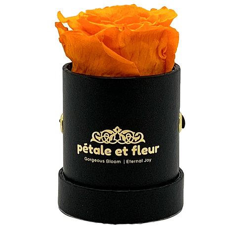 Single orange rose in black box