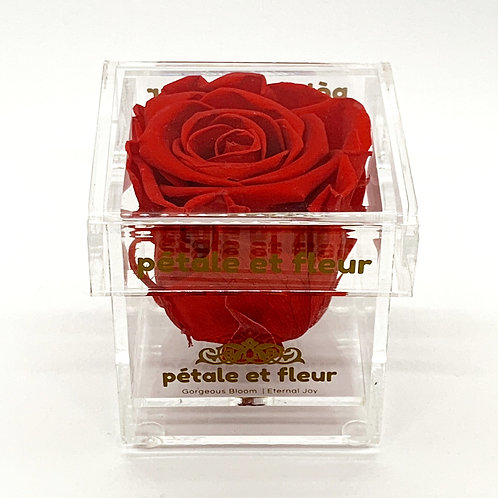 Single red color rose in acrylic box