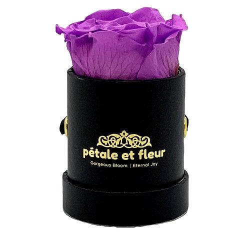 Single purple color rose in black box