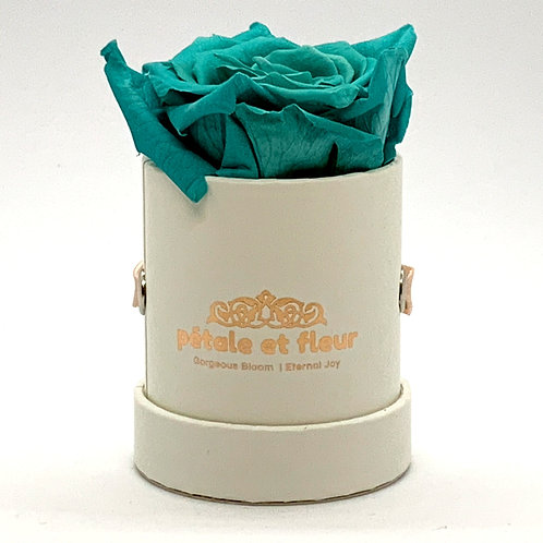 Single mint color rose in white box