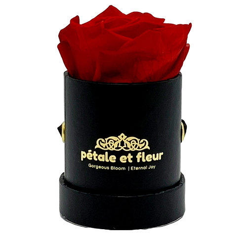 Single red rose in black box