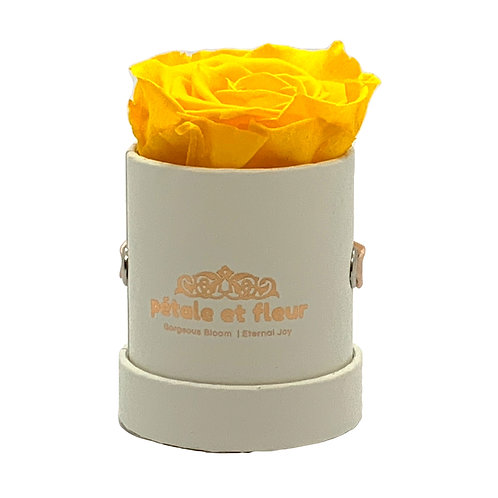 Single yellow color rose in white box