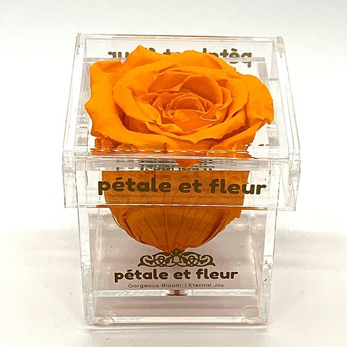 Single yellow color rose in acrylic box
