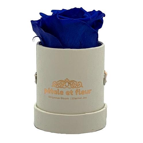Single blue color rose in white box