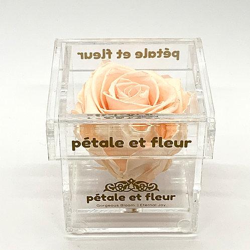 Single peach color rose in acrylic box