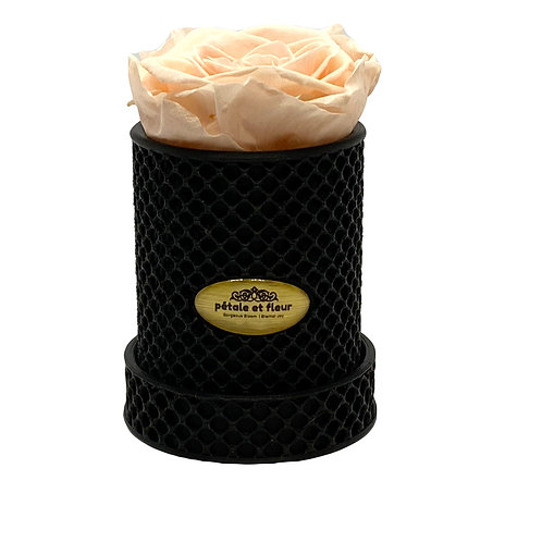 Single peach rose in a 3-D printed box