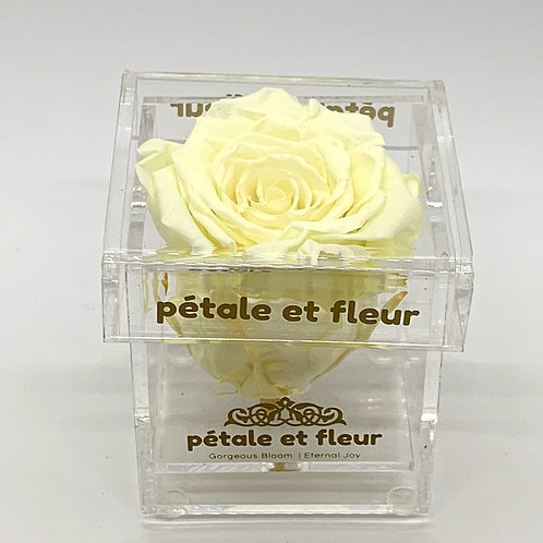 Single ivory color rose in acrylic box