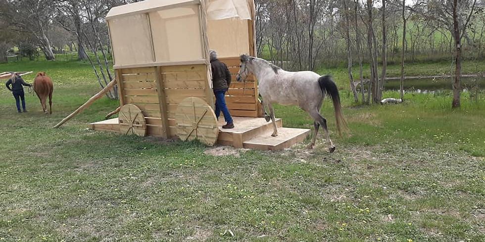 Donkey Play Day